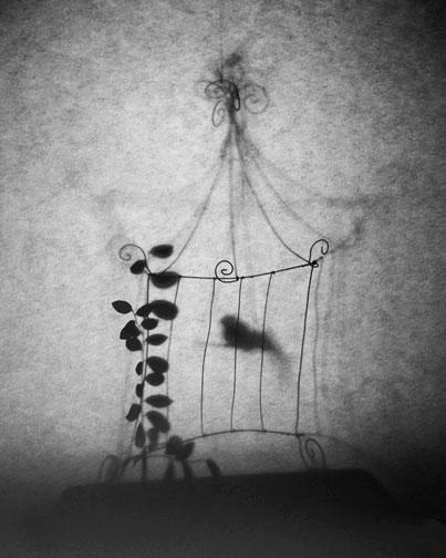 01.birdinacage