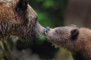 grizzly-kiss-tony-dathan