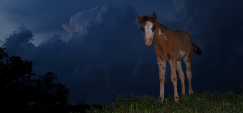 Storm-Pony