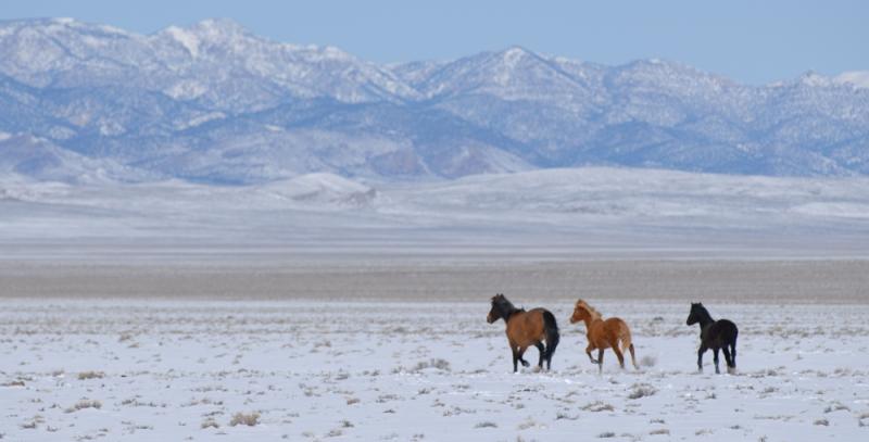 Trip15-Wild-Horses4
