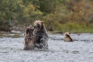 garter bears